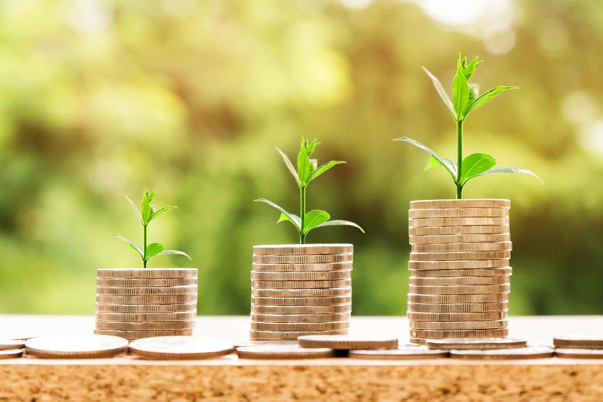 Aus Geldstapeln wachsen Pflänzchen hervor.
